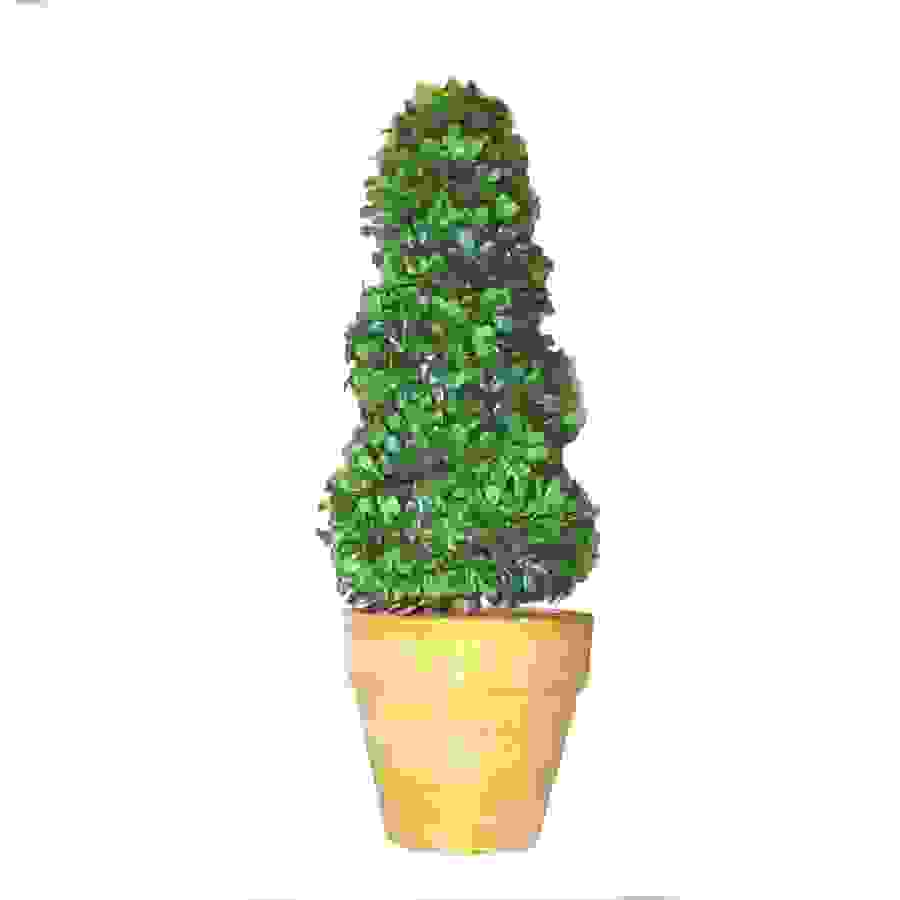 MINI TOPIARY TWIST (21cm)