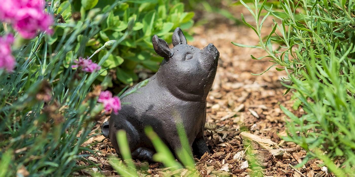 Attractive Garden Animals